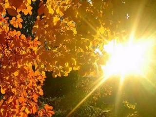 В Киеве зафиксировали сразу три температурных рекорда