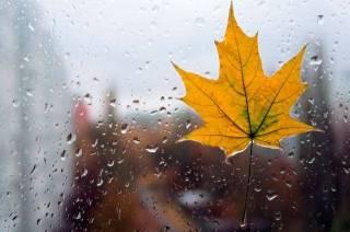На выходных в Украину вернется настоящая осень