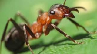 Ученые не на шутку озаботились массовым вымиранием насекомых