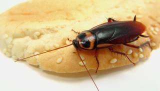 В киевском супермаркете продают булки с тараканами