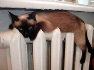Украинцам рассказали, насколько реально подорожает отопление