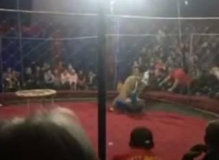 В российском цирке львица едва не растерзала трехлетнюю девочку (видео 18+)