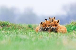 Всего за несколько десятилетий люди уничтожили более половины диких животных, – исследование