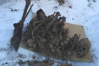 Россиянин решил выкопать яму на огороде и нашел десяток простреленных черепов