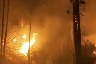 Жертвами лесных пожаров в Калифорнии стали десятки людей: новое видео стихии