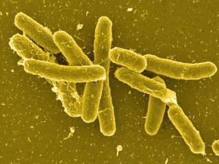 Ученые заявили, что «косившая» украинцев бактерия начала мутировать