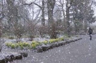 В Киеве пошел первый снег