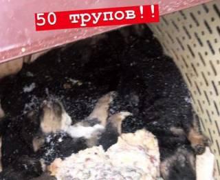 Под Киевом задержаны супруги-живодеры. Зоозащитники просят неравнодушных выступить в поддержку их ареста
