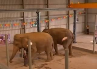 В Индии появилась больница для слонов