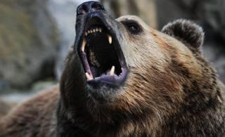 На Харьковщине медведь набросился на женщину