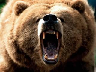 Тихий ужас: в Канаде медведь гризли разорвал женщину и ее крошечную дочь