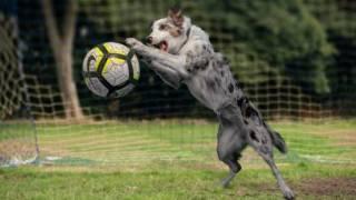 Футбольный курьез в Аргентине: пес спас команду от верного гола, выбив мяч с линии ворот