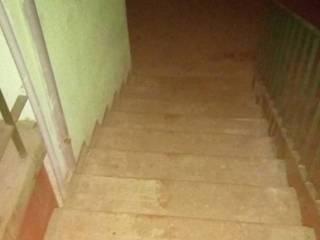 Киевская полиция отказалась искать живодера, убившего четырех собак (фото 18+)