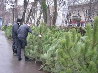 Стало известно, где в Киеве можно купить новогоднюю елку. Полный список