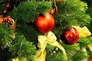 Киевлян предупреждают о «вонючих» новогодних елках