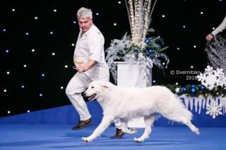 В Киеве прошли Международные выставки собак всех пород «Киевская Русь – 2018» и «Хрустальный Кубок Украины – 2018»