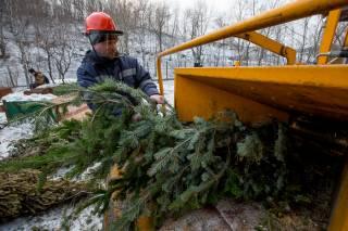 Киевляне смогут цивилизованно сдать новогодние ели на утилизацию. Опубликован список пунктов приема