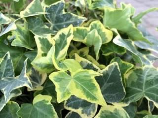 Ученые рассказали, какое домашнее растение предотвращает развитие рака