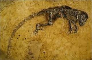 Ученым удалось трехмерно реконструировать череп морской рептилии возрастом в 200 млн лет