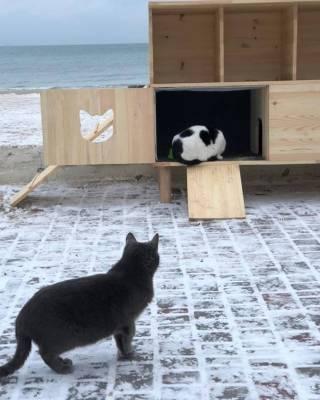 В Одессе на берегу моря появился домик для бездомных котов