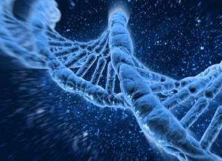 Биологам удалось удалить «ген старости»