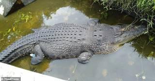 В Индонезии огромный крокодил живьем съел ученого
