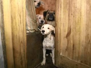 Харьковчанка терроризирует соседей с помощью двух десятков собак, которых не выпускает на улицу