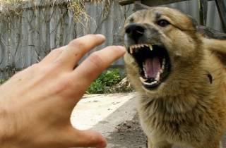В Бердянске бродячий пес набросился на девушку