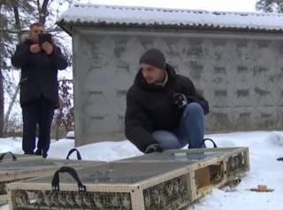 В аэропорту «Борисполь» задержали контрабандную партию щеглов – некоторые птицы погибли
