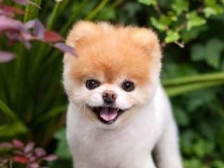 В США умерла «самая милая собака» в мире