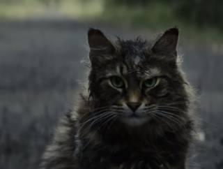 Власти Киева хотят открыть «легальное» кладбище домашних животных