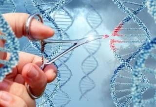 В Китае родились ГМО-дети