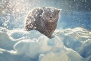 Украину заносит снегом – в правительстве заговорили об экстренных мерах