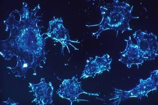 Биологи заявили, что нашли «блокиратор» онкологии