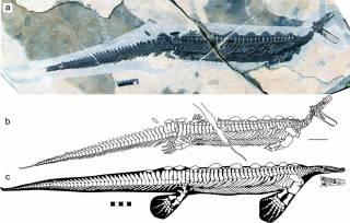 В Китае нашли останки странного доисторического «утконоса»