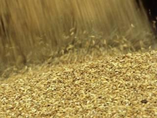 На Харьковщине упавшего мужчину насмерть засыпало тоннами зерна