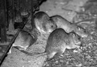 Харьковские крысы бегут с тонущего корабля Порошенко