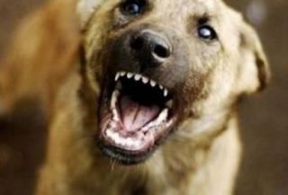 На Херсонщине бродячая собака разорвала лицо 9-летней девочке