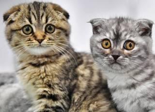 Медики заявили, что кошки могут вызывать у людей шизофрению