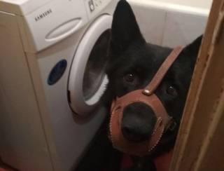 Львовянка натравила собаку на полицейских, которых сама же вызвала, заявив об изнасиловании