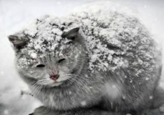 В трех селах под Киевом ввели карантин из-за бешеной домашней кошки