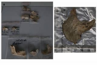 Найдены свидетельства того, что древние французы бальзамировали отрубленные головы врагов