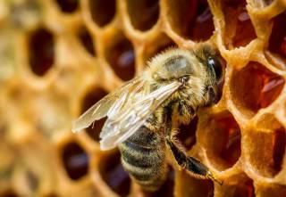 Как оказалось, пчелы могут решать математические задачи
