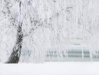 На востоке России ударили 50-градусные морозы. Синоптики говорят, что такого тут никогда не было