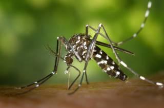 Ученым наконец-то удалось обезвредить опасных комаров