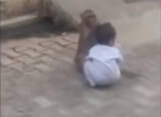 В Индии обезьяна похитила маленького ребенка (18+)