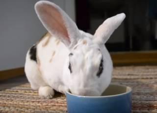 Необычный кролик из Финляндии удивил весь мир своими трюками