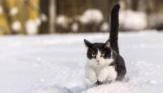 До конца недели зима еще немного помучает украинцев