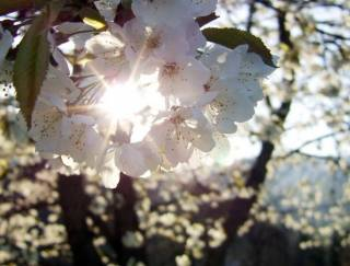 Синоптики рассказали украинцам о погоде в первые дни весны