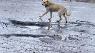 В Николаеве бродячих собак атакует опасный паразит, который легко передается и человеку